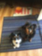 Lucye=raven2.jpg