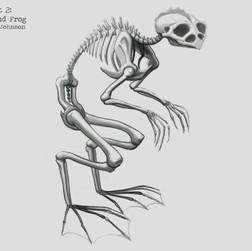 Loveland Frog Skeleton