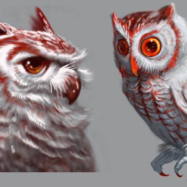 Owl Studies