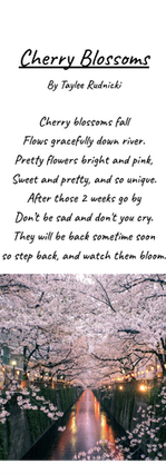 Cherry Blossoms by Taylee Rudnicki