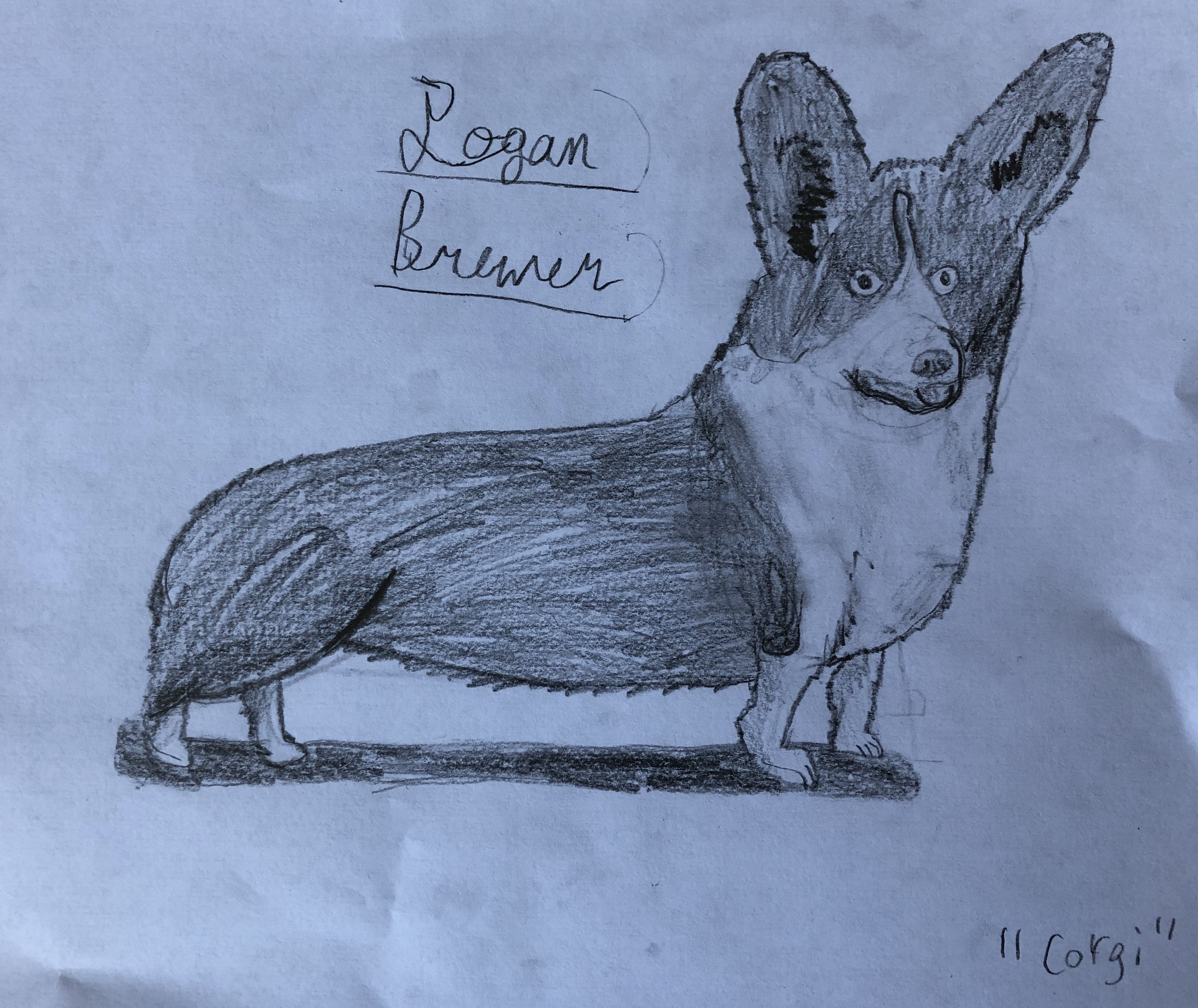 Corgi by Logan Brewer