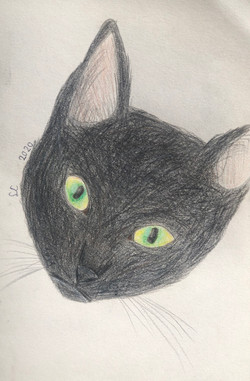 My Cat Willow by Sophia Coppa
