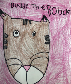Buddy the Bobcat by Brooklyn Fackrell