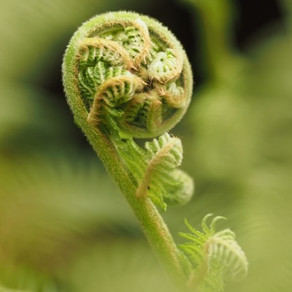 Life's Ultimate Unfolding...