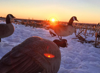 Goose Hunter knocked out in Easton