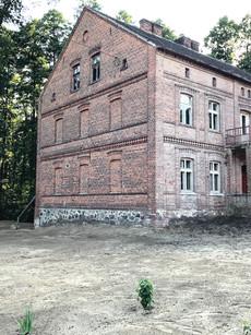 Dom po oczyszczeniu działki i posadzeniu pierwszych krzewów białej morwy.