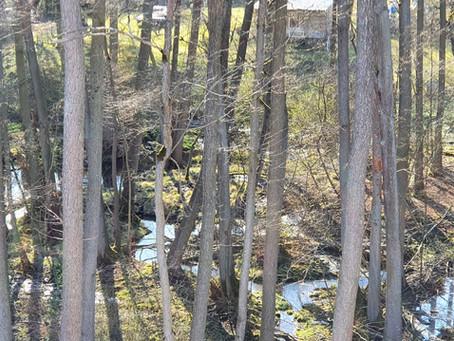 Rzeka Gryżynka rozpoczyna swój bieg za naszym oknem.