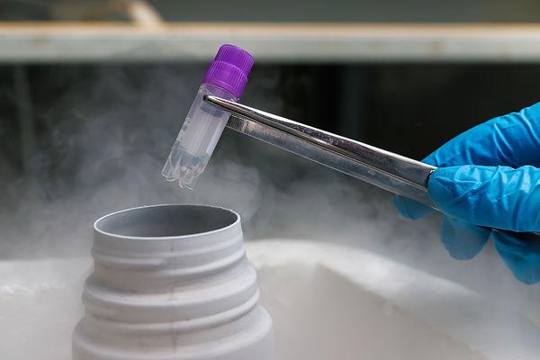 Эмбриолог достаёт из жидкого азота замороженный материал.