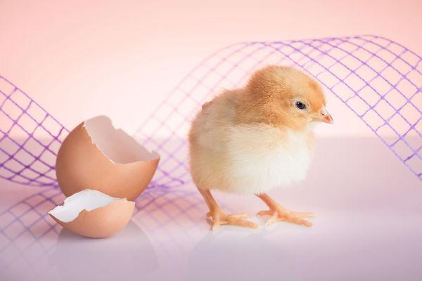 Вылупление из яйца, хетчинг