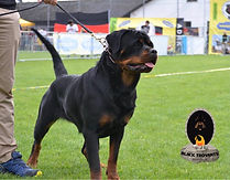 Rita Vonguard GDI Black Trovants Rottweiler Female Romania