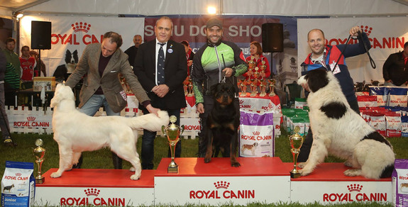 Best Junior in Show, Sibiu 2017
