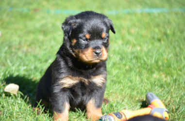 Male, 5 weeks old