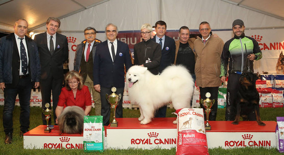 Reserve Best in Show, Sibiu 2017