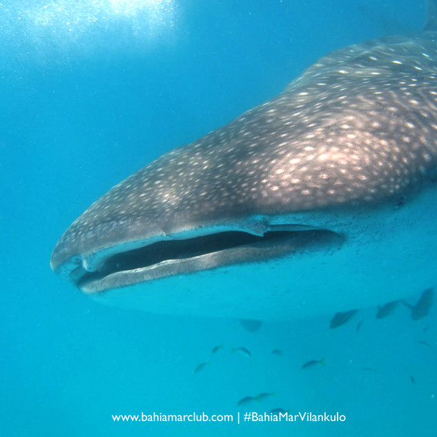 Bazaruto Marine National Park Sea Safaris