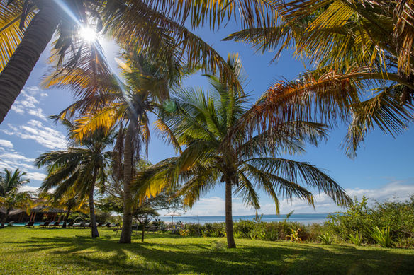 Luxurious gardens Bahia Mar