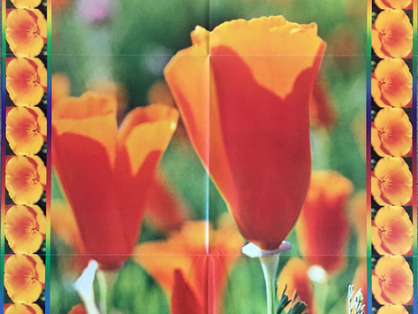 1975 SFAI Poppy Poster, Alice Erskine, Whatever...