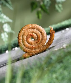delicious escargot