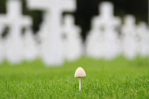 mushroom I