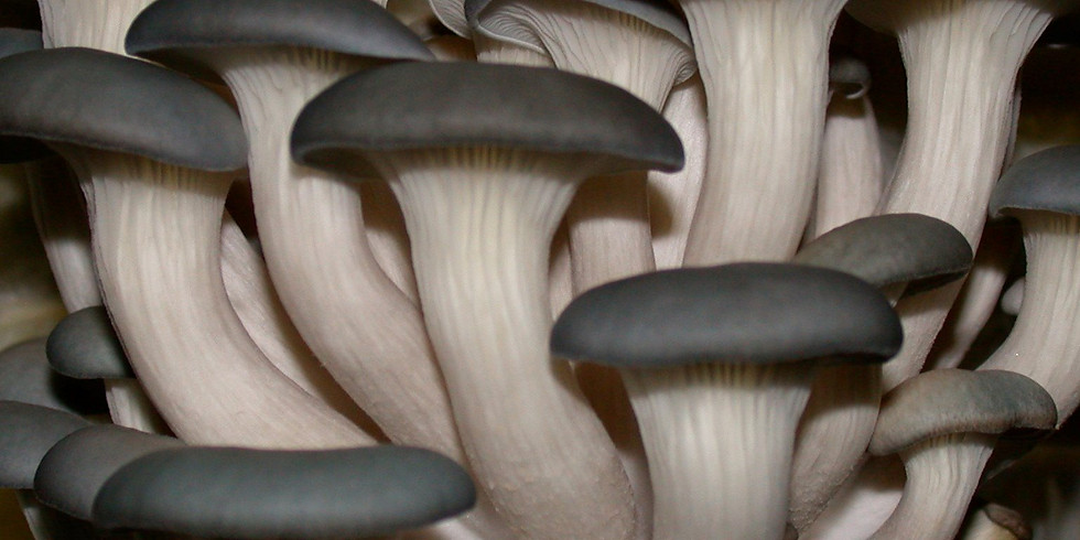 NORTHERN BEACHES SYDNEY  ULTIMATE FUNGAL WIZARDRY FEB 13TH: 10:00-12:00, 12:30-2:30 OR 3:00-5:00