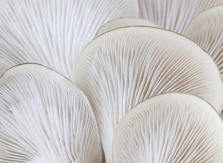 The Oyster Mushroom
