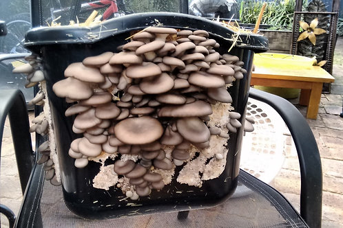 OUTDOOR FUNGAL WIZARDRY COURSE ONLY