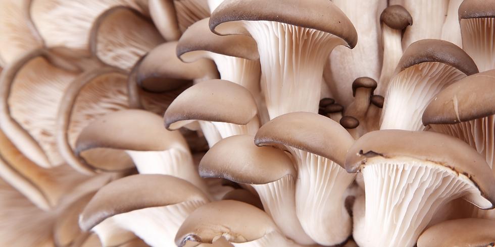 Mildura Ultimate Fungal Wizardry December 11th