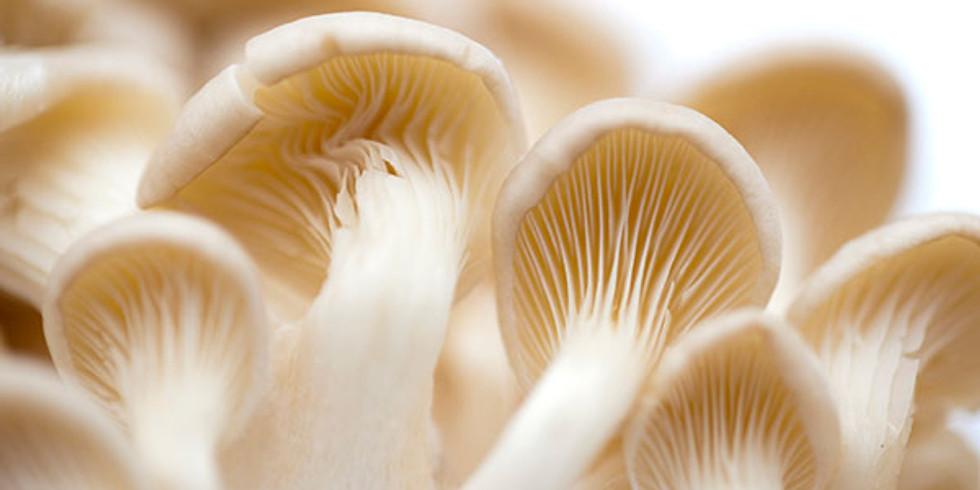 Bunbury Ultimate Fungal Wizardry December 11th