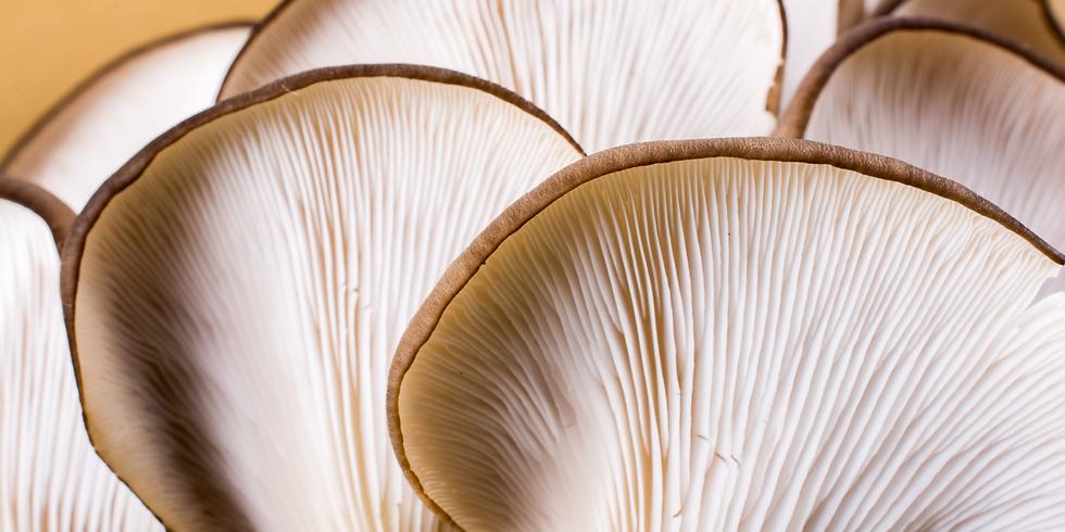 Albury Ultimate Fungal Wizardry December 11th