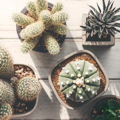 Cactus and Succulent Show at La Promenade