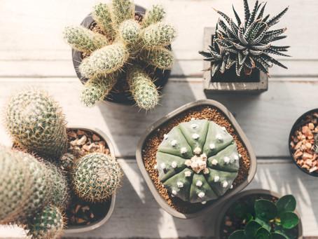 Cactus and Succulent Show at La Promenade