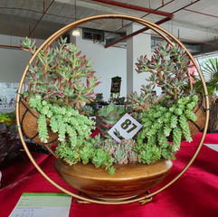 Succulent Show winners announced, New Houseplant Show announced