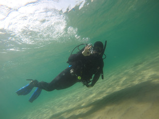 Learning to dive - made to look easy!