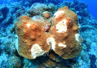 Saving reefs!