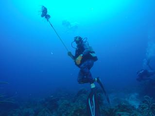 Aqua week - wetsuit stays on!