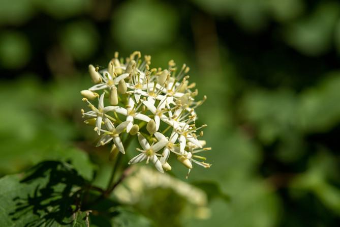 Blume am Rheinufer