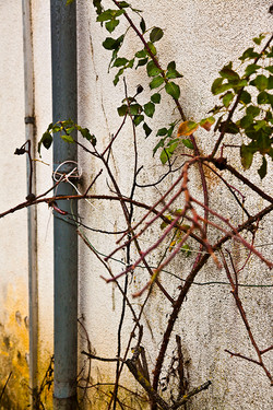 Wall Plant Drain