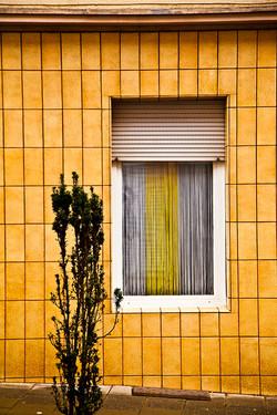 Window Yellow
