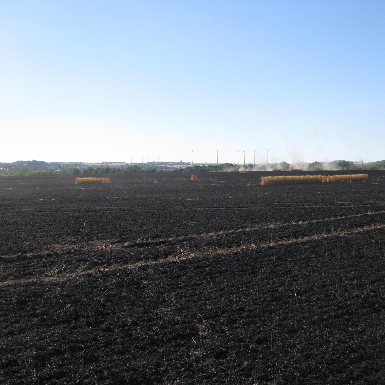 Getreidefeldbrand