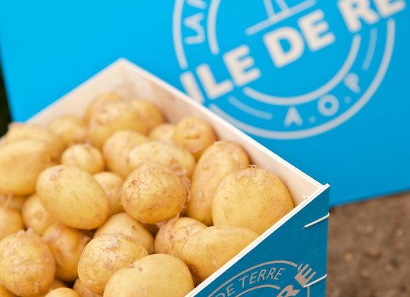 Patates nouvelles Île de Ré - 1 Kg
