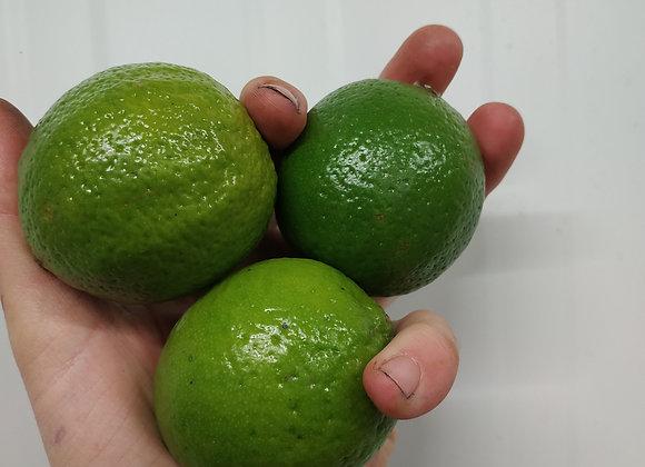 Citron vert - la pièce