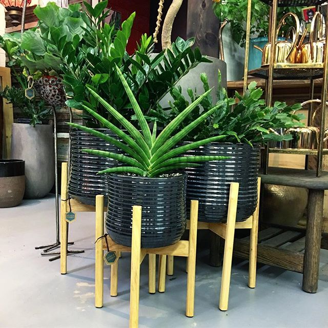 Take your plants up a notch (or at least