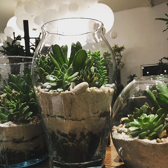Staying late potting up succulent terrariums 💚✨🌿 #succulents #terrarium #gifts #plants #houseplant