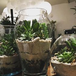 Staying late potting up succulent terrariums 💚✨🌿 #succulents #terrarium #gifts #plants #houseplant