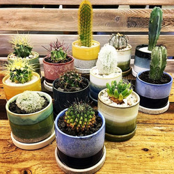 Add a little danger to your windowsill 🌵💚 Cacti in these new layered ceramic pots 😍, who could wa