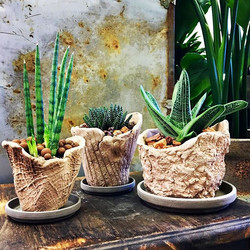 We have a small assortment of earthy tex