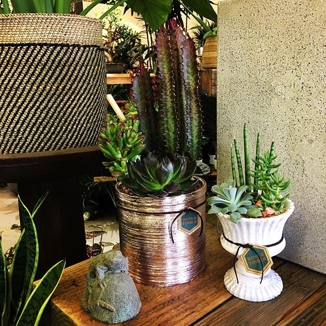 There are so many possibilities with succulents! 💚 #succulove #plants #indoorplants #plantshop #sho