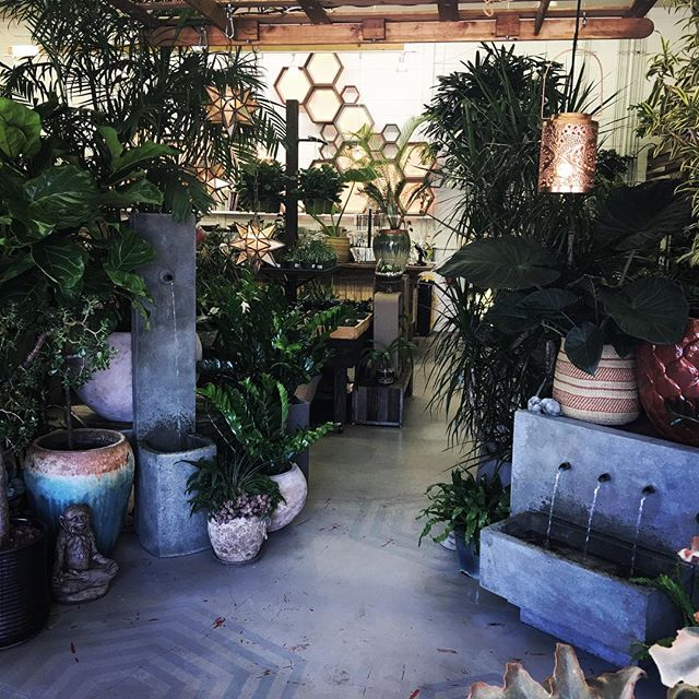 Another perfect day indoors 🏝 #indoorplants #plantshop #houseplants #officeplants #plantvibes #satu