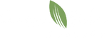 green-palm-logo.png