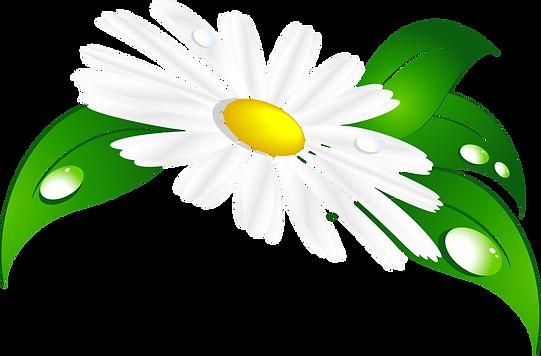 kisspng-matricaria-clip-art-camomile-5ab