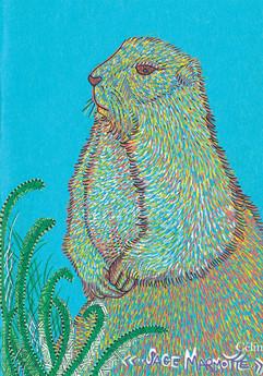 Sage marmotte